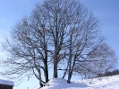 Baum_Februar