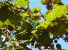 Blaetter_Herbstsonne