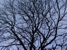 Bäume / Trees