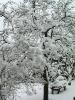 zwetschgenbaum_winter
