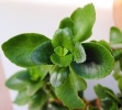 gr_ne_zimmerpflanze