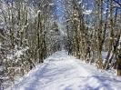 verschneiter_Weg