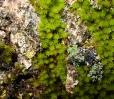 Pflanzen / Plants