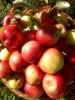 Bio-Äpfel