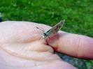 Schmetterling_Hand